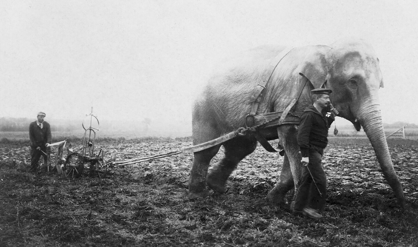 Closing Editorial E Flux Architecture Inside Flats Jazmine Black A Circus Elephant From Belgian Zoo Working On Farm During World War I After Horses And Mules Were Drafted To Aid In The Effort 1915